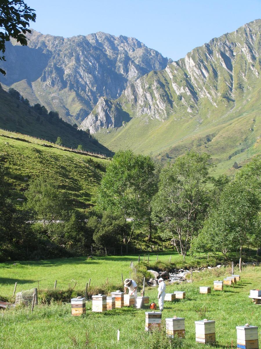 Apiculture dans les Pyrenees, avec Phillipe Ballot-Flurin