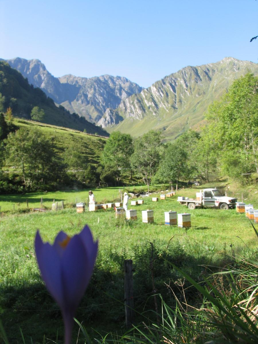 Apicultura in Pirieni, in apropiere de Cauterets